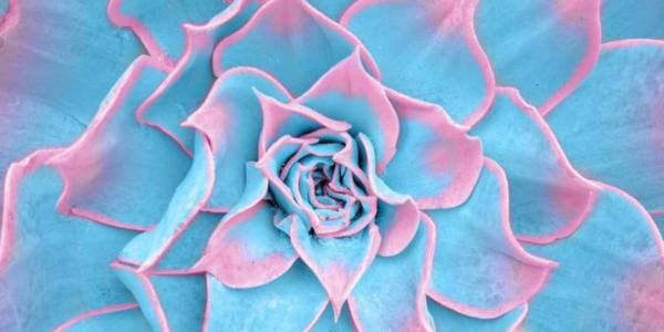 photography, colour, design, art, Instagram, Matt Crump, Candy Minimal, Follow Friday